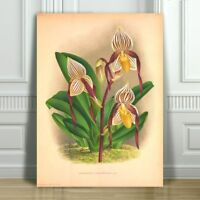 JEAN LINDEN - Beautiful Yellow & Brown Orchid #38 - CANVAS PRINT POSTER - 16x12""