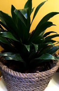"Basket Planter Woven Rope Flower Pot Bronze Tone Window Box 7"" H  x 5"" W  New"