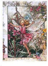Cicely Mary Barker ' Flower Fairy ' modern  new postcard