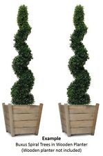 2 x Best Quality Artificial Spiral Boxwood Topiary Trees 120cm (4ft)