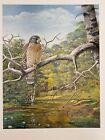 "Louis Agassiz Fuertes & The Singular Beauty of Birds, Red-shouldered Hawk"" Print"