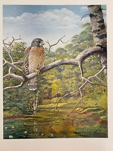 "Louis Agassiz Fuertes & The Singular Beauty of Birds, Red-shouldered Hawk"" Print"