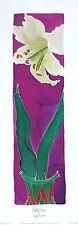 HAZEL BURROWS Pale Face Lily art print DESIGNER new SIZE:48cm x 13cm  RARE