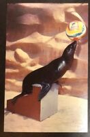 California Sea Lion From The San Diego Zoo, CA. Vintage Postcard Collection