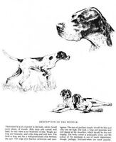 Pointer Sketch - 1963 Vintage Dog Print - Matted