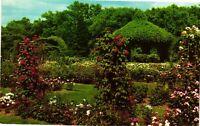 Vintage Postcard - Rose Garden Elizabeth Park Hartford Connecticut CT #1944