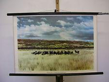 schönes altes Wandbild Schafzucht Patagonien Argentinien 75x51 vintage map ~1960