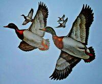 Vintage Clark Bronson Flying Mallard Ducks Print 1968 Outdoorsman's Gallery