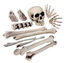 Taille Réelle Humains Crâne & OS Squelette Accessoire Halloween Horreur