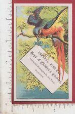 A580 Edward C. Almy children's clothes trade card parrot C. W. Eaton Boston, MA