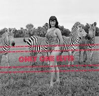 "1954 BETTIE PAGE 8x10 Photo ""QUEEN OF PIN-UPS"" in CHEETAH SUIT Zebras"