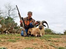 Ram Hunt For 2 Persons / 2 Nights Lodging Texas Dall Sheep Hunting Deer Hog