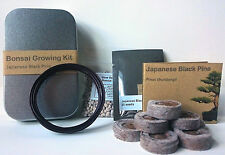 Japanese Black Pine Minature Tree kit, Perfect Gift Box , Bonsai , Plant & Grow