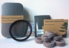 PINO NERO GIAPPONESE KIT ALBERO miniatura, Confezione regalo perfetto, bonsai, piante & Grow