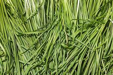 7.78g ORGANIC Garlic Chive Seeds ~1750ct  ~Asian Vegetable ~ Korean Buchukimchi