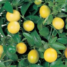 Lemon Full Sun Fruit Plants