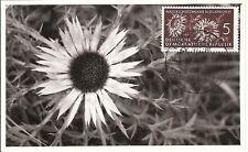 Maximum Card Maximumkarte Germany DDR Deutschland (68)Photo  flower