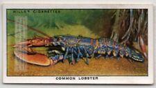 Common European Lobster Seafood Marine Ocean c80 Y/O Ad Trade Card