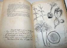 ERBARIO - Pochettino: Prontuario Studente Botanica Chiavi Analitiche 1878 Roma