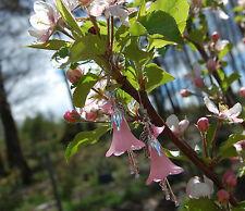 Boucles d'oreilles fleurs rose pastel goth sorcière féerique mignon kawaii elfe