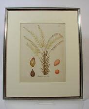 Stich Grafik altkoloriert Elais Guineensis Linn. Pflanze Botanik um 1800
