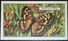 Speckled Wood   Butterfly   Original 1930's  Vintage Colour Card  VGC