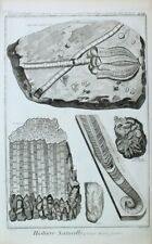 Mineralogie Fossil Koralle Encrinite Crinoiden-Kalkstein Geradhörner Orthoceras