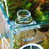 Crystal Glass Pot Plant Cup Holder Red Shrimp Aquarium Fish Tank Aquatic New