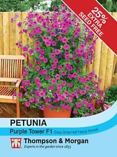 Thompson & Morgan - Flowers - Petunia Purple Tower F1 Hybrid - 25 Seed