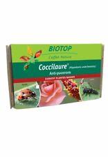 30 larves coccinelles coccilaure anti puceron