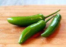 40++ Serrano Chili Hot Pepper Seeds NON-GMO Mexican