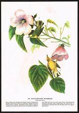 1930s Original Vintage Audubon Blue Winged Warbler Bird Limited Ed Art Print