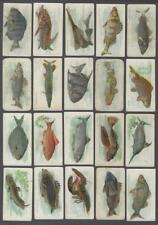1912 ITC C53 Fish Series Tobacco Cards Complete Set of 50