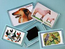 Acrylic Animal Modern (1970-Now) Collectable Keyrings