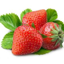 200x Red Strawberry Seeds Berry Bacca Plant Everbearing Fruit Garden Yard Grow