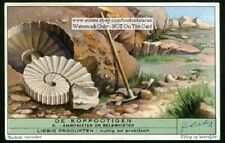 Cephalopode Ancient Ammonites Belemnites Fossil 75+ Y/O Trade Ad Card