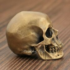Handmade Luxury Bronze Europa Human Skull 1:5 Read Head Model Decor XOX3A