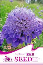 1 Pack 20 Sweet Bluebasin Seeds Scabiosa Atropurpurea Garden Flowers A200