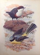 Dipper & Grey Wagtail,  1947 Vintage Print By Tunnicliffe,  Beautiful Birds