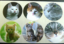 12 Cat and Kitten Stickers, Animal Self-Adhesive Labels CAT51
