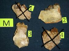 Oreodont teeth in jaw sections - M 1-4 - you choose - White River Badlands