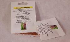 Fuchsschwanz rot Amaranthus caudatus Samen Saatgut Saat Profiqualität