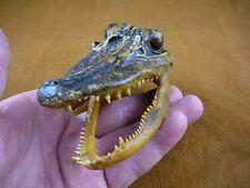 """G-Def-276) 4-1/8"""" Deformed Gator ALLIGATOR HEAD jaw teeth TAXIDERMY weird gators"""