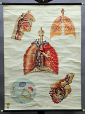 old pull-down medical wall chart anatomical poster print respiratory system lung