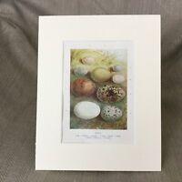 1895 Vittoriano Stampa Uccelli Uova Egg Raccolta Jay Sparrow Kestrel Robin Epoca