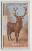 Commercial Value Of The Deer 90+ Y/O Trade Ad Card
