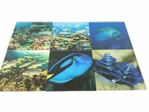 Acrylic Ocean Photographic Art Prints x 6 Each With Stand AU Sellers 10cm x 10cm