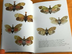 Lanternfly : Mysterious Insects Japanese Book #1179