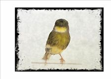 Gloster Canary Vintage Style  Wall Plaque Cage Bird Picture  Aviary Sign