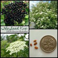 10+ BLACK ELDERBERRY TREE SEEDS (Sambucus nigra) European Edible Fruit Deciduous